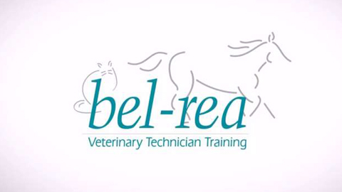 Integrative Test Medicine Part 1 – Bel-Rea CE Webinar