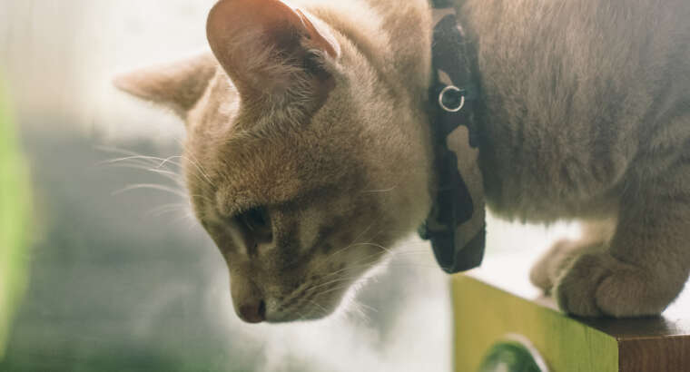 Getting Your Cat Trail Ready