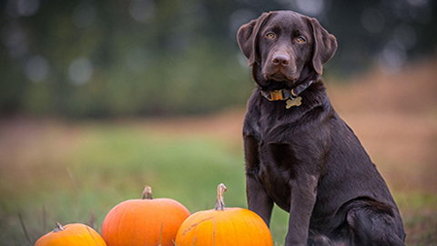 Halloween And Pets: Treats and Safety Advice
